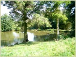 Bromdon Fish Pool, Shropshire Fishing Pools